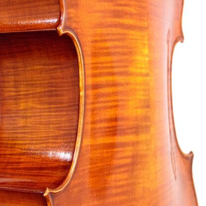 Welving achterblad Cello Apprendista